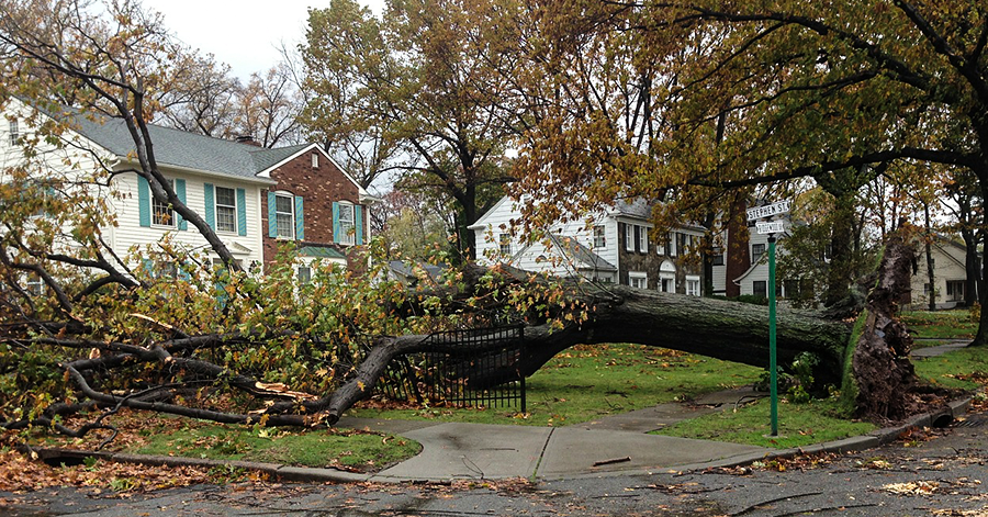 If A Tree Falls Over In Your Backyard, Do You Hire A Lawyer?